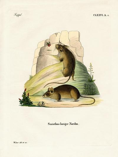 Southern Birch Mouse--Giclee Print