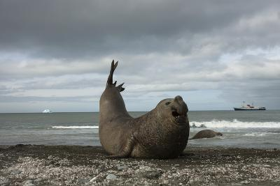 Southern Elephant Seal-Joe McDonald-Photographic Print