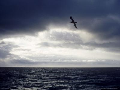 Southern Giant Petrel at Sea, Argentina-Mary Plage-Photographic Print