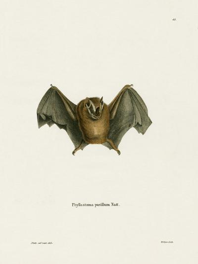Southern Little Yellow-Eared Bat--Giclee Print