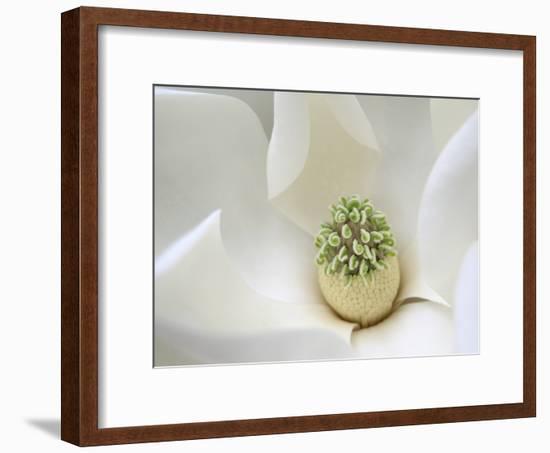 Southern Magnolia-Karen Ussery-Framed Premium Photographic Print