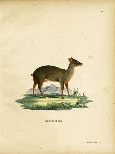 Southern Pudu--Giclee Print
