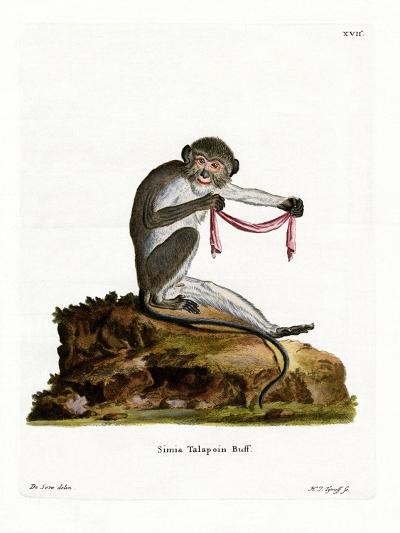 Southern Talapoin--Giclee Print