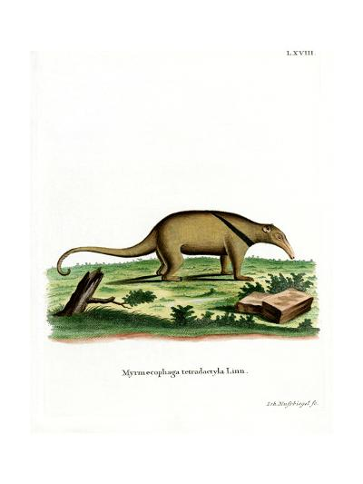 Southern Tamandua--Giclee Print