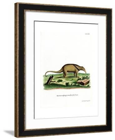 Southern Tamandua--Framed Giclee Print