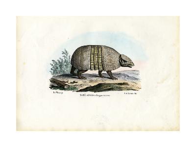 Southern Three-Banded Armadillo, 1863-79-Raimundo Petraroja-Giclee Print