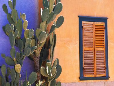 Southwestern Cactus and Window, Tucson, Arizona, USA-Tom Haseltine-Photographic Print