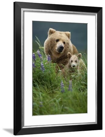 Sow Grizzly and Cubs in Grass Hallo Bay Katmai Np Alaska-Design Pics Inc-Framed Photographic Print