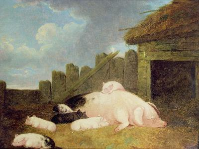 Sow with Piglets in the Sty-John Frederick Herring Jnr-Giclee Print