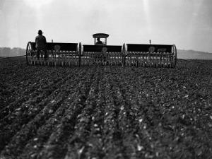 Sowing Corn