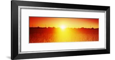 Soybean Field at Sunset, Wood County, Ohio, USA--Framed Photographic Print