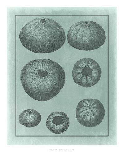 Spa Shell Collection V--Giclee Print