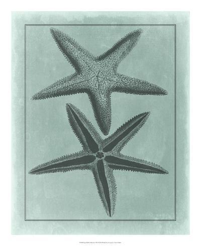 Spa Shell Collection VIII--Giclee Print