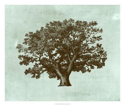 Spa Tree IV-Vision Studio-Giclee Print
