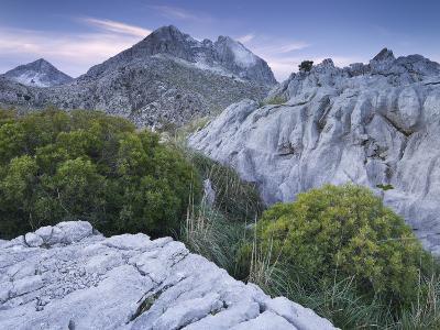 Spain, Majorca, Serra De Tramuntana, Puig Major, Puig De Ses Vinyes, Col De Cals Reis, Rock, Shrubs-Rainer Mirau-Photographic Print