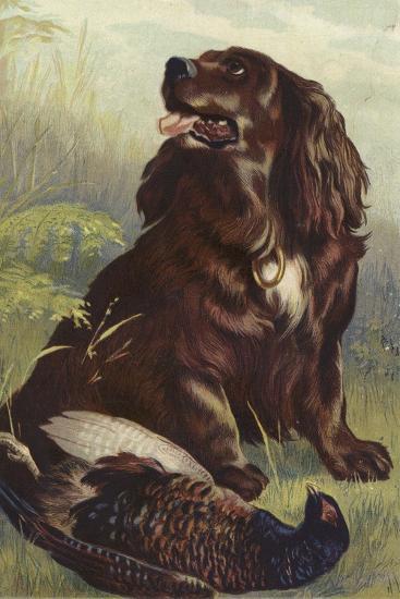 Spaniel and Pheasant--Giclee Print