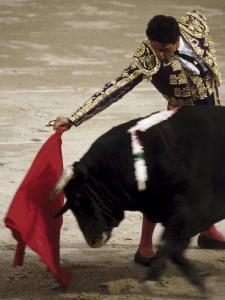 Spanish Bullfighter Camargue France