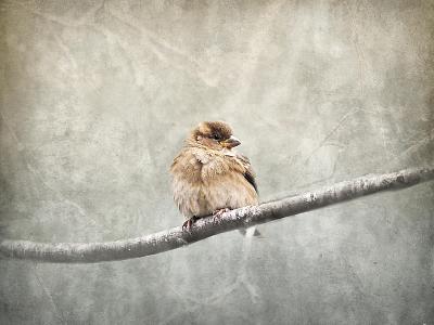 Sparrow Braving the Cold-Jai Johnson-Giclee Print