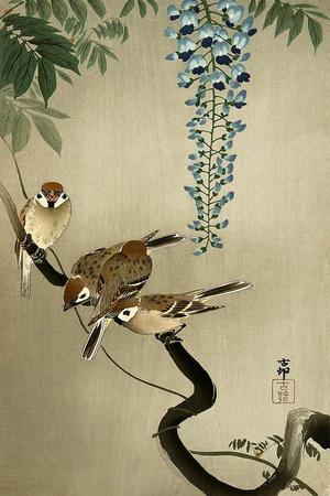 https://imgc.artprintimages.com/img/print/sparrows-and-wisteria_u-l-pnab2y0.jpg?p=0