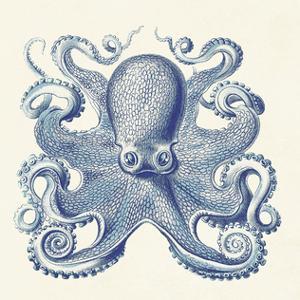 Octopus I by Sparx Studio