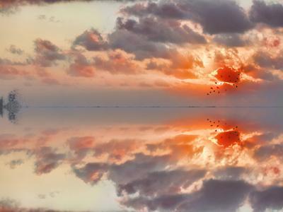 https://imgc.artprintimages.com/img/print/special-reflections_u-l-phf2600.jpg?p=0