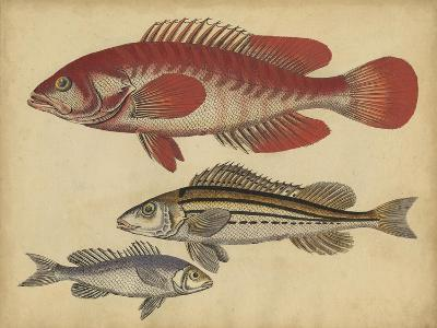 Species of Fish II-Friedrich Strack-Art Print