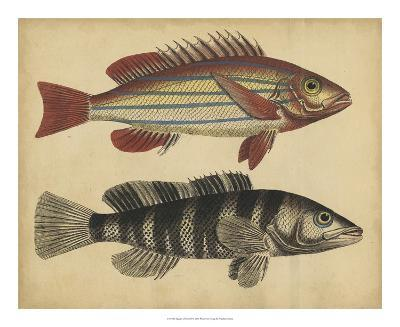 Species of Fish III-Friedrich Strack-Giclee Print