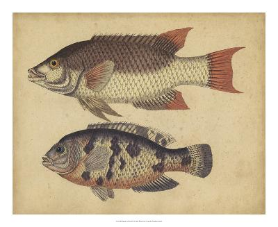 Species of Fish IV-Friedrich Strack-Giclee Print