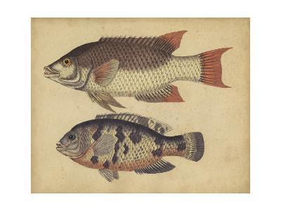 Species of Fish IV-Friedrich Strack-Art Print