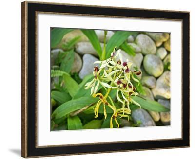 Specimen on Display at the Kew Orchid Festival--Framed Photographic Print