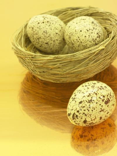Speckled Eggs in a Little Bird's Nest--Photographic Print