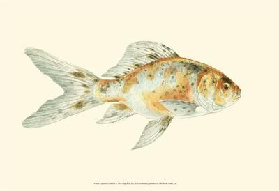 Speckled Goldfish-S^ Matsubara-Art Print