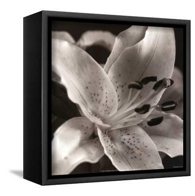 Speckled Lily--Framed Canvas Print