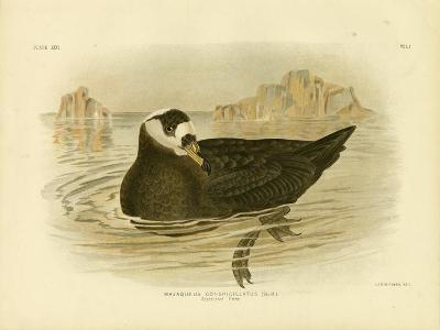 Spectacled Petrel, 1891-Gracius Broinowski-Giclee Print
