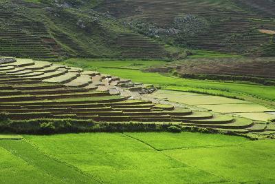 Spectacular Green Rice Field in Rainy Season, Ambalavao, Madagascar-Anthony Asael-Photographic Print