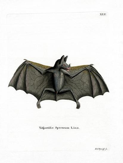 Spectral Bat--Giclee Print