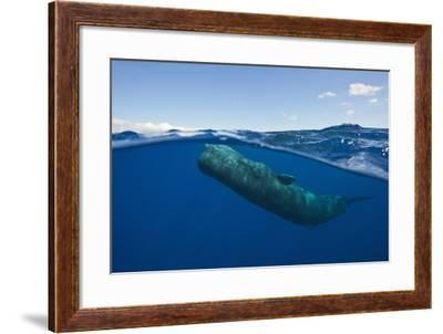 Sperm Whale (Physeter Macrocephalus)-Reinhard Dirscherl-Framed Photographic Print