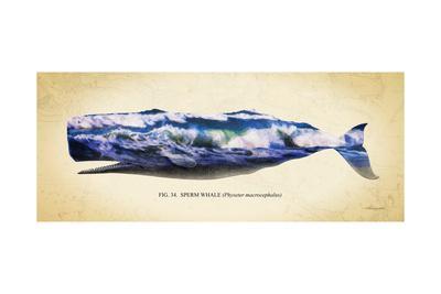 https://imgc.artprintimages.com/img/print/sperm-whale_u-l-q11utdg0.jpg?p=0