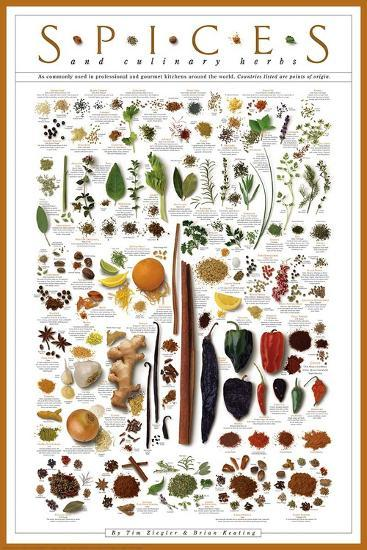 Spices and Culinary Herbs--Art Print