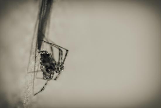 Spider 1-Pixie Pics-Photographic Print