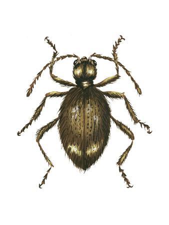 https://imgc.artprintimages.com/img/print/spider-beetle-insect-family-ptinidae-suborder-polyphaga_u-l-q135l0d0.jpg?p=0