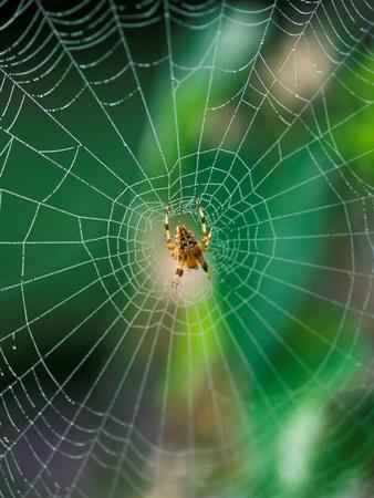 https://imgc.artprintimages.com/img/print/spider-in-the-middle-of-cobweb-september_u-l-q10r34q0.jpg?p=0