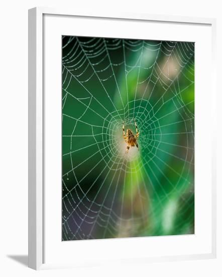 Spider in the Middle of Cobweb, September-Lynn Keddie-Framed Photographic Print