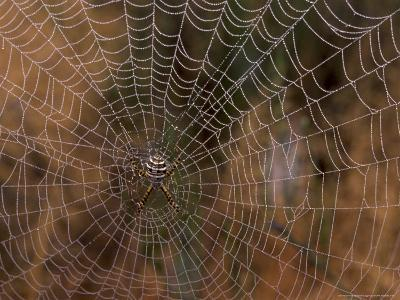 Spider in Web, Washington, USA-Terry Eggers-Photographic Print