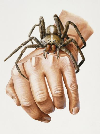 Spider on Hand, Ctenidae, Artwork by Mike Taylor--Giclee Print