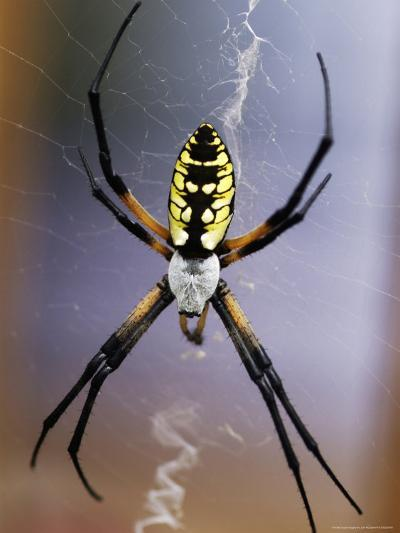 Spider on its Web-Jim McGuire-Photographic Print
