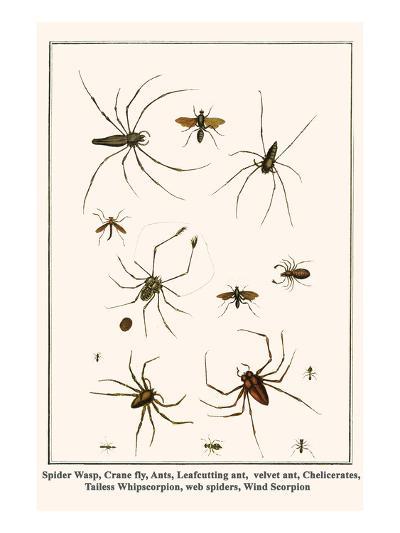Spider Wasp, Crane Fly, Ants, Leafcutting Ant, Velvet Ant, Chelicerates, Tailess Whipscorpion, etc.-Albertus Seba-Art Print