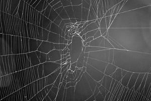 Spider Web b/w