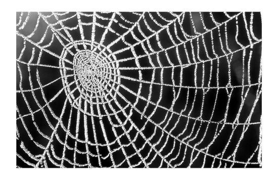 Spider Web Sparkle-erichan-Art Print