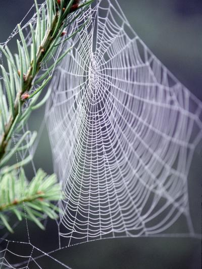 Spider Webs and Dew Drops-Jim Corwin-Photographic Print